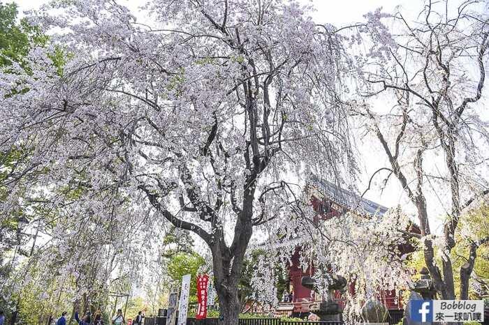 Ueno park 6