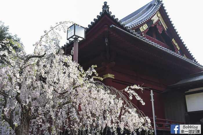 Ueno park 9