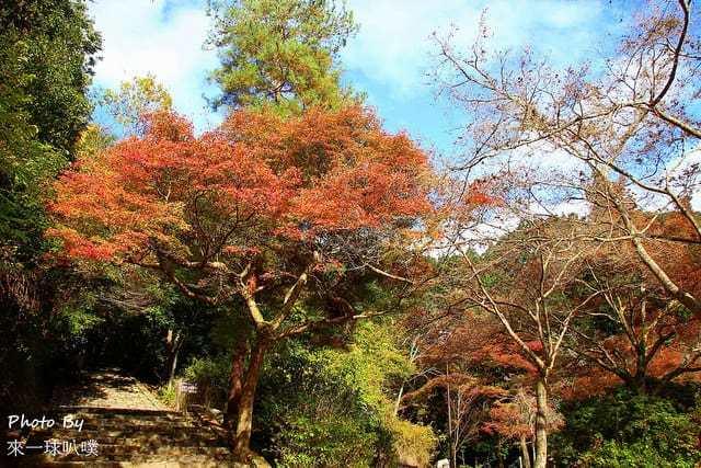 嵐山公園46