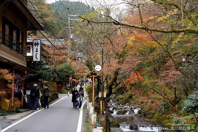 京都鴨川散步,京都鴨川櫻花(美麗枝垂櫻)